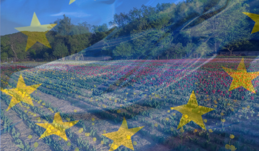 The newsletter of the European Union Delegation in the Republic of Moldova, for the period January -February 2021